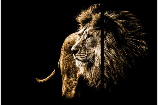 Модульная картина Лев