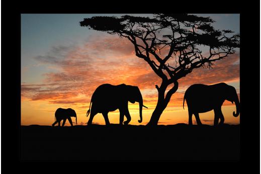 Картина Слоны